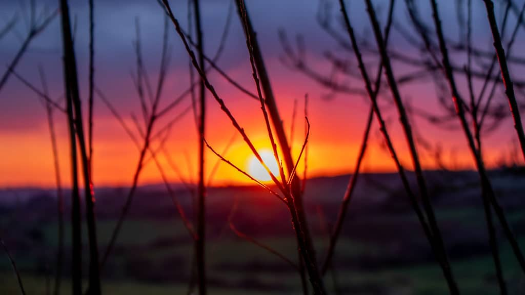 Red sky sunset through trees West Cork 4