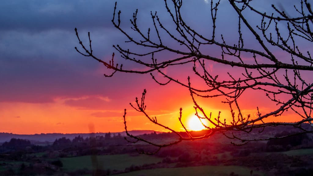 Red sky sunset through trees West Cork 2