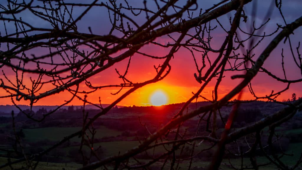 Red sky sunset through trees West Cork