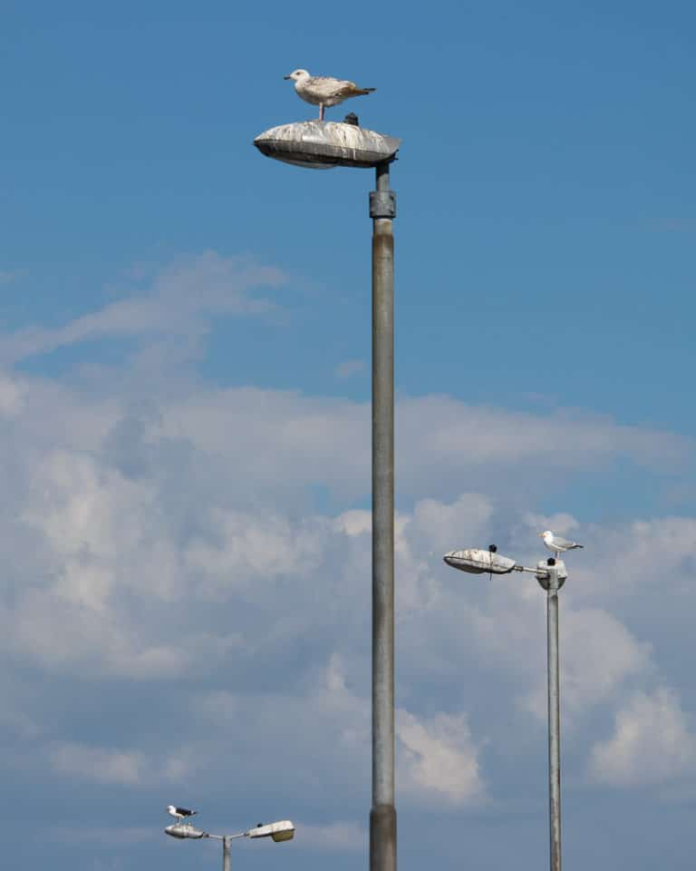 Seagulls on lamp post at Schull pier West Cork